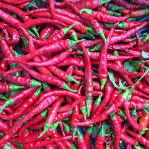 long-red-cayenne-pepper-seeds-capsicum-annuum-202-monticello