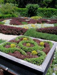 Filoli mini knot garden
